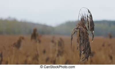 Field of dry grass and forest.