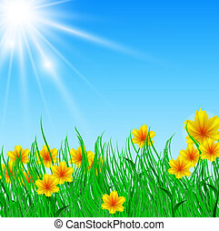 field of flower with bright sun