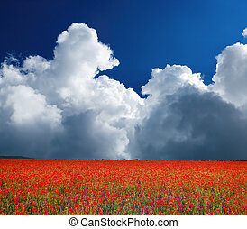 Field of flowering poppies