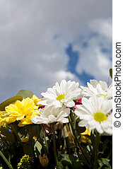 field of flowers in spring with cloudy sky background