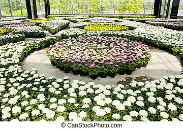 Field of flowers in the tropics