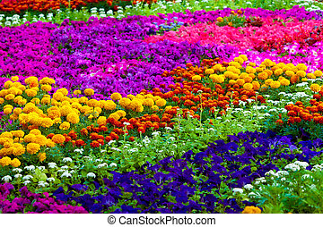 Field of flowers of different colors