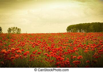 Field of flowers on sunset