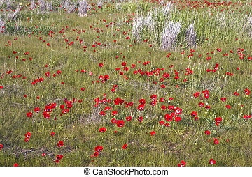 Field of flowers - Trees and red Anemone flowers view in...