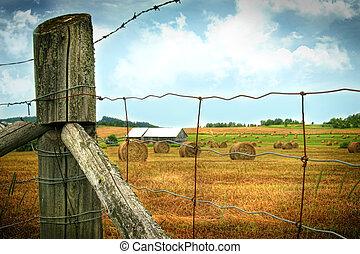 Field of freshly cut bales of hay in late July