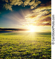 field of grass and cloudy sky on sunset