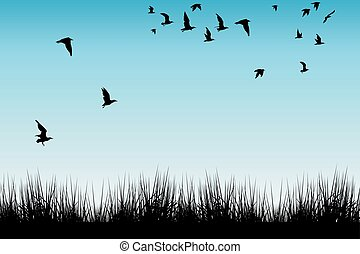 Field of grass and silhouettes of flying birds