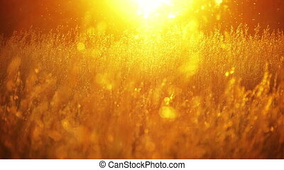 field of grass and sunset 2