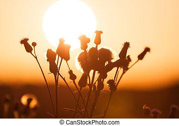 Field of grass during summer sunset
