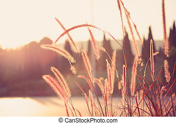 field of grass during sunset with filter effect retro vintage style