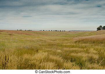 Field of Grass in Colorado