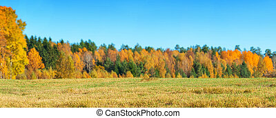 Field of grass with an autumn forest