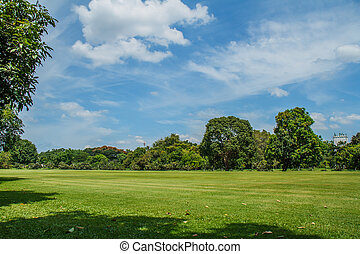 Field of grass with sky in the background.