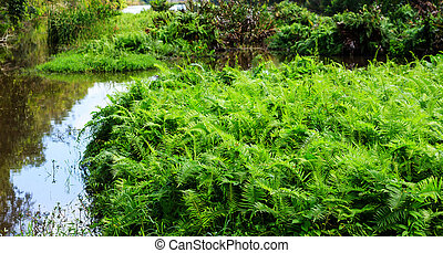 Field of green ferns