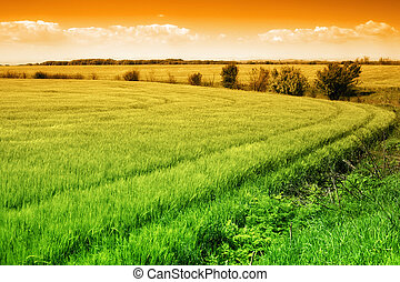 Field of green fresh grass and colorful sky