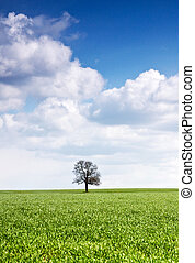 Field of green grass and a single tree with some nice clouds on the blue sky