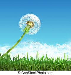 Field of green grass and sky with dandelion.