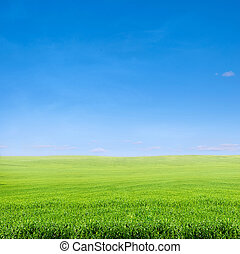 field of green grass over blue sky - rural landscape