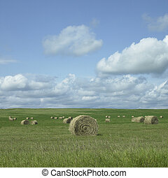 Field of hay