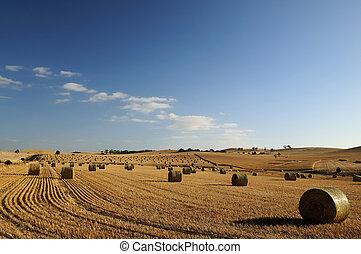 Field of hay, Barossa Valley
