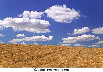 Field of hay.