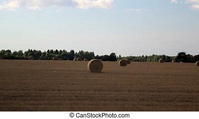 Field of hay Haystacks