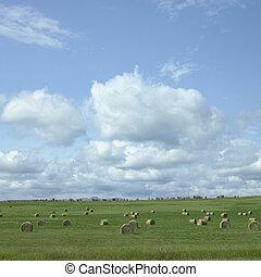 Field of hay