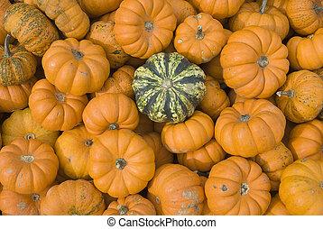 orange pumpkins with one green one