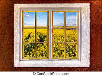 Field of rapeseed seen through a window