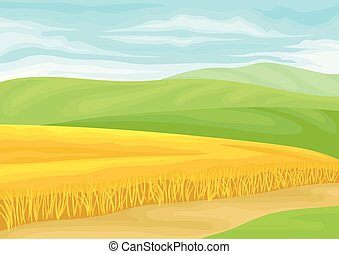 Field of ripe wheat. Vector illustration on white background.