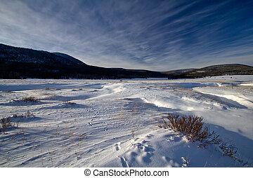 Field of Snow in Utah with bush