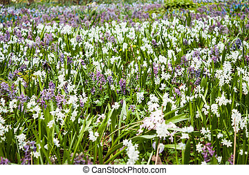 Field of spring flowers.