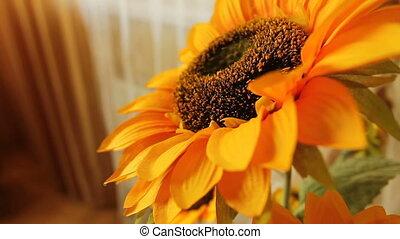 field of Sunflower, Sunflower in room