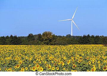 Field of Sunflowers and Wind Turbine