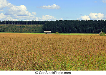 Field of Timothy grass, Phleum pratense - A rural landscape ...