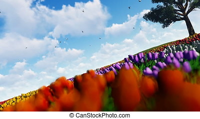 Field of tulips against blue sky with pigeons flying and old...