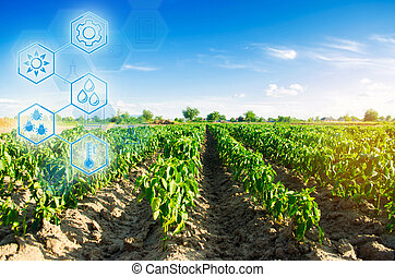 field of vegetables on a sunny day. Fresh green greens. Innovations and developments in agriculture. Scientific work and selection, crop forecasting and condition analysis. Modern farming.