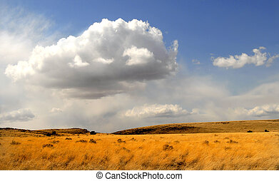 Field of waving grass under a dramatic sky in Arizona