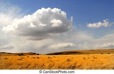 Field of waving grass under a dramatic sky in Arizona