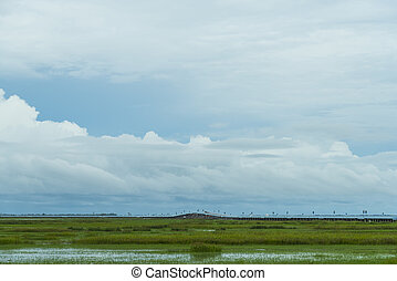field of wetland with blue sky