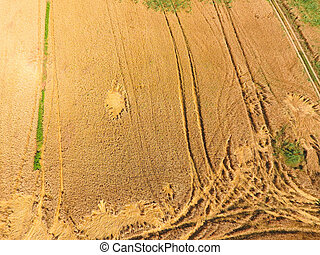 field of wheat, a top view