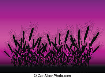 Field of wheat after sunset