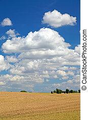 Field of wheat before harvesting, Europe.