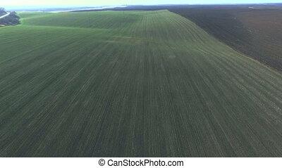 Field of wheat Bird's