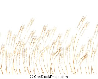 Field of wheat on white. EPS 10 vector file included