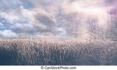 Field of wheat. - Stormy clouds with lightning over field of...