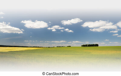 Field of wheat under the blue sky, with clouds on horizon