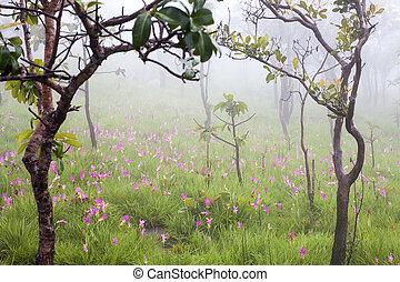 Field of wild flowers in the mist