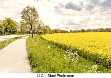 Field of yellow flowers in a beautiful countryside