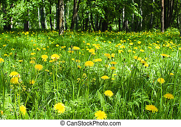 yellow spring flowers in the forest